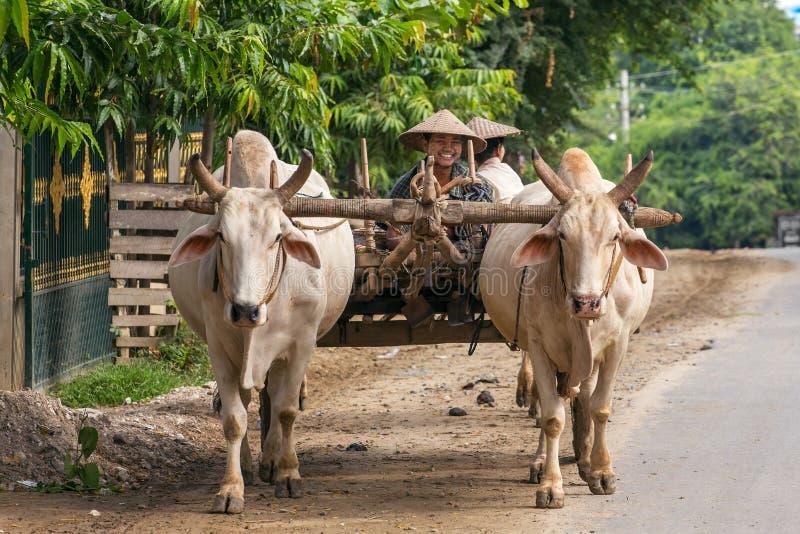 Fazendeiro burmese de sorriso que conduz um oxcart perto de Mandalay, Myanmar fotografia de stock