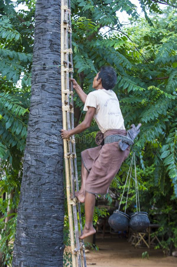 Fazendeiro burmese que escala uma palmeira imagens de stock royalty free