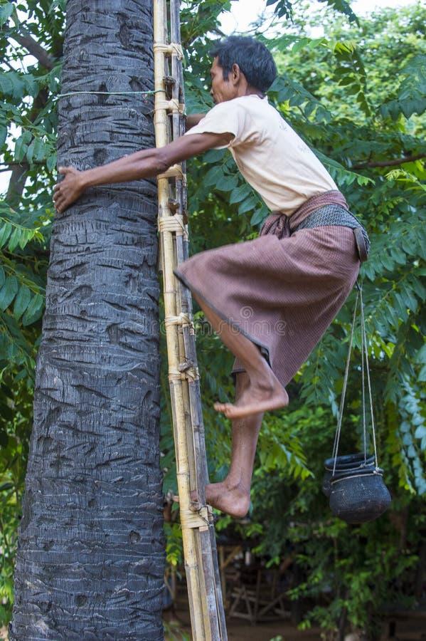 Fazendeiro burmese que escala uma palmeira fotografia de stock