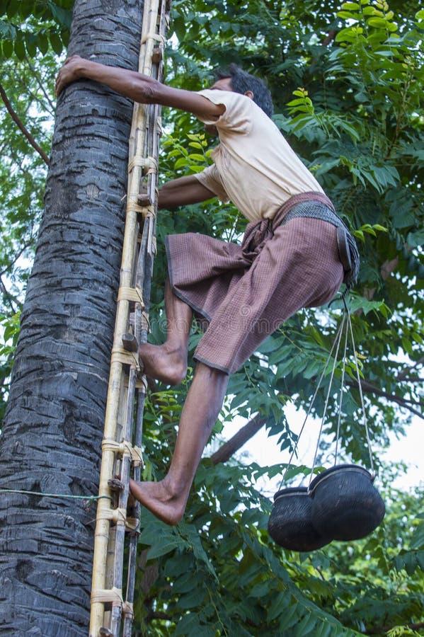 Fazendeiro burmese que escala uma palmeira imagem de stock royalty free
