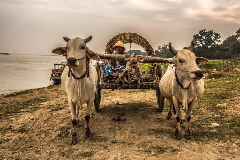 Fazendeiro burmese que monta um carro do boi foto de stock royalty free