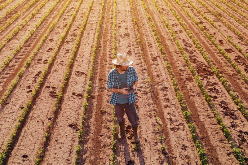Fazendeiro com o controlador remoto do zangão no campo do feijão de soja, vista aérea fotos de stock royalty free