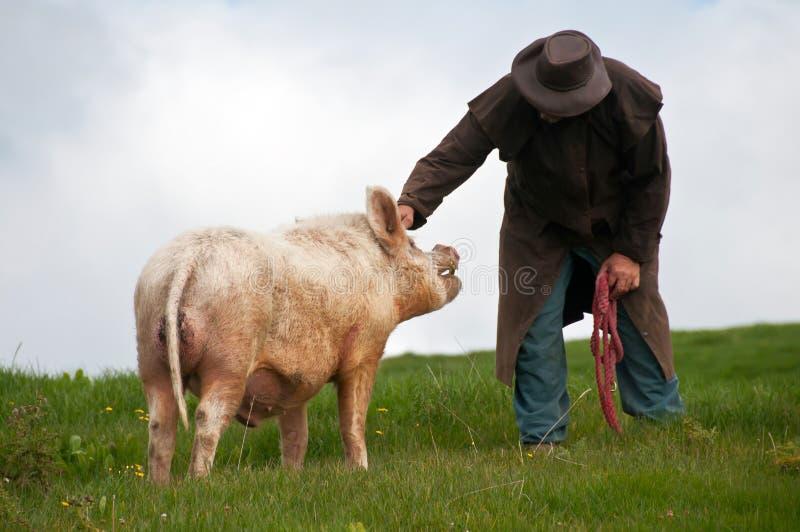 Fazendeiro com porco do varrão imagens de stock royalty free