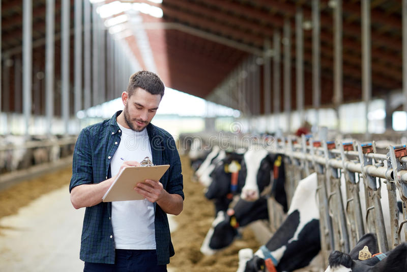Fazendeiro com prancheta e vacas no estábulo na exploração agrícola fotografia de stock
