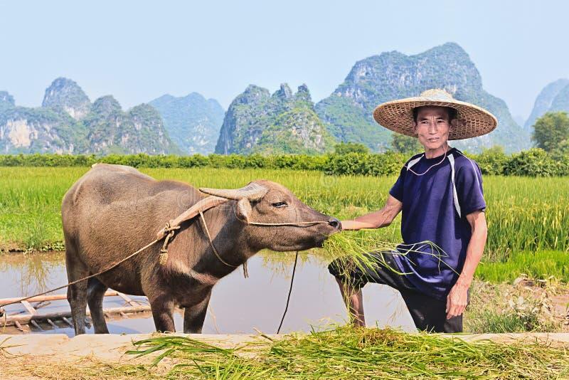 Fazendeiro com seu búfalo com as montanhas do cársico no fundo, Yangshuo, China fotografia de stock royalty free
