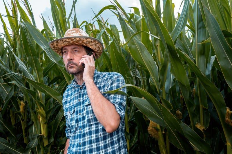 Fazendeiro considerável que fala no telefone celular no campo de milho fotos de stock royalty free