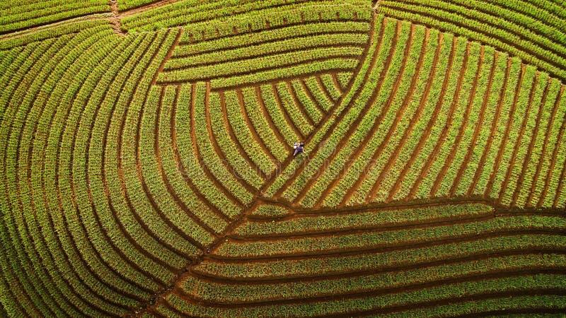 Fazendeiro da cebola de Argapura Majalengka Java ocidental imagens de stock royalty free