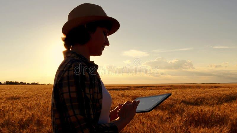 Fazendeiro da moça no campo de trigo no fundo do por do sol A menina usa uma tabuleta, planos para colher fotografia de stock royalty free