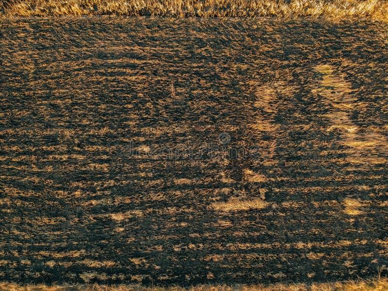 Fazendeiro da vista aérea que queima seu campo do arroz do zangão pov, parte superior imagem de stock
