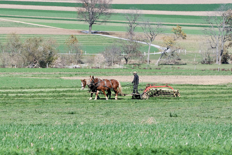 Fazendeiro de Amish foto de stock