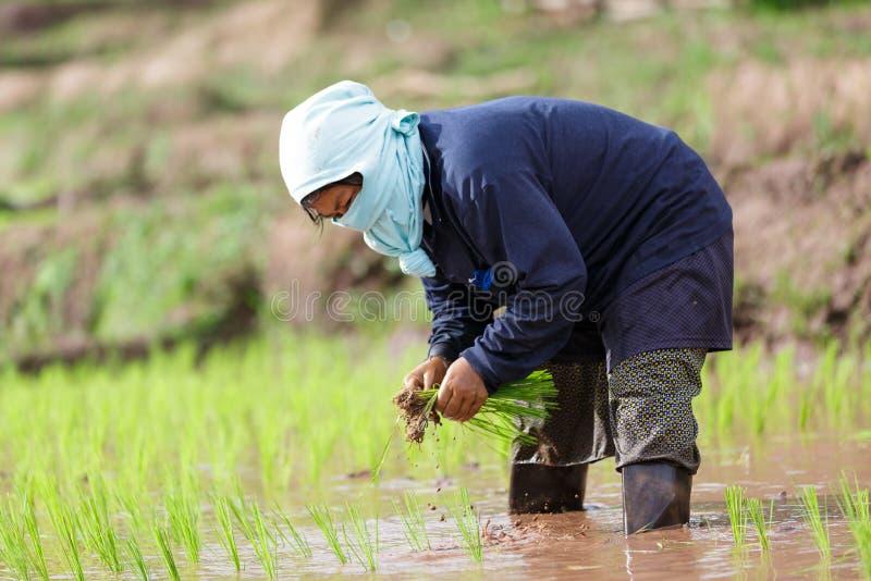 Fazendeiro de Myanmar imagem de stock royalty free