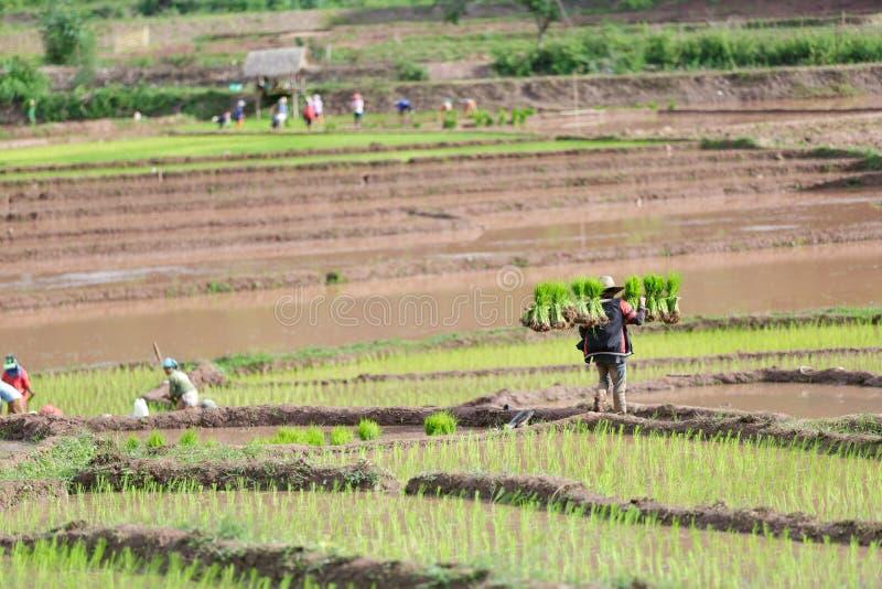 Fazendeiro de Myanmar fotografia de stock royalty free