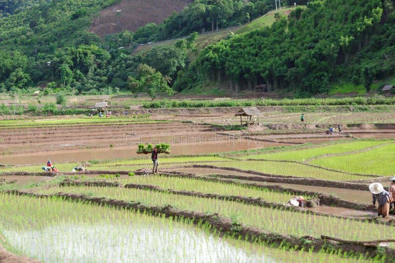 Fazendeiro de Myanmar fotografia de stock