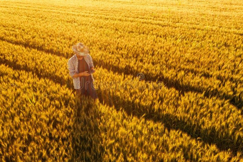 Fazendeiro de trigo com o controlador remoto do zangão no campo fotos de stock