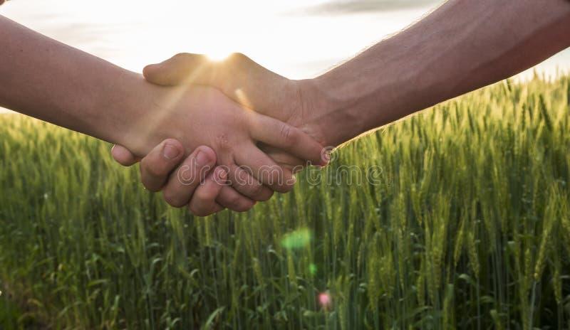 Fazendeiro do aperto de mão dois no fundo de um campo de trigo com brilho do sol imagem de stock