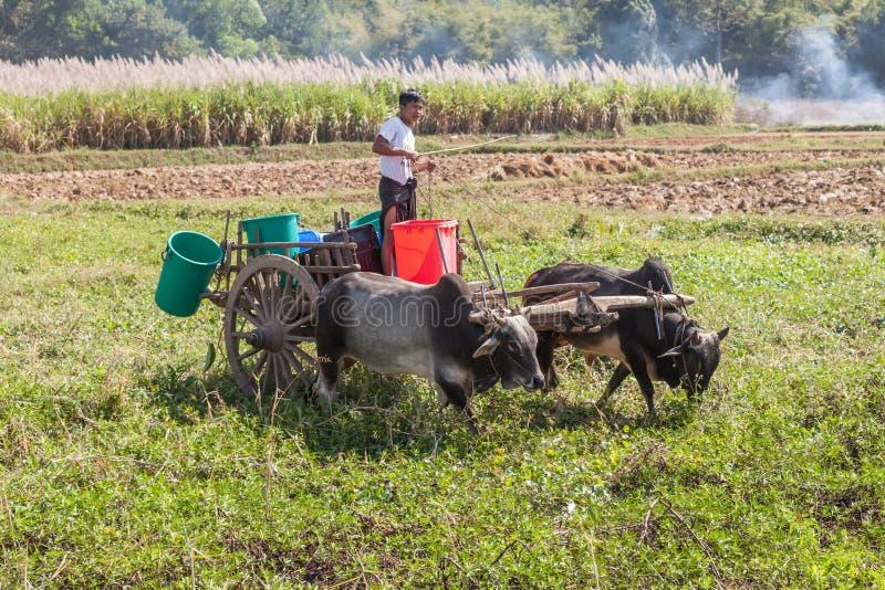 Fazendeiro do birmanês no lago Inle em Myanmar foto de stock