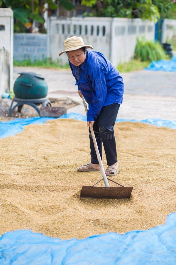 Fazendeiro do estilo de vida tailandês Os fazendeiros tailandeses usam áreas de plantação secas a d fotografia de stock royalty free