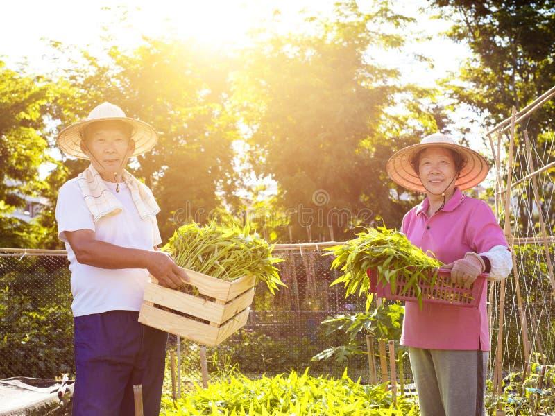 Fazendeiro dos pares que trabalha na exploração agrícola vegetal imagem de stock