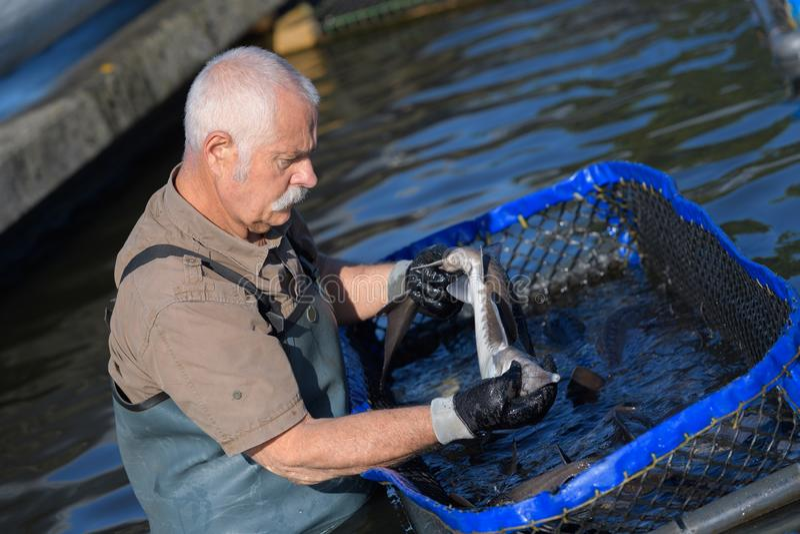 Fazendeiro dos peixes na água imagem de stock