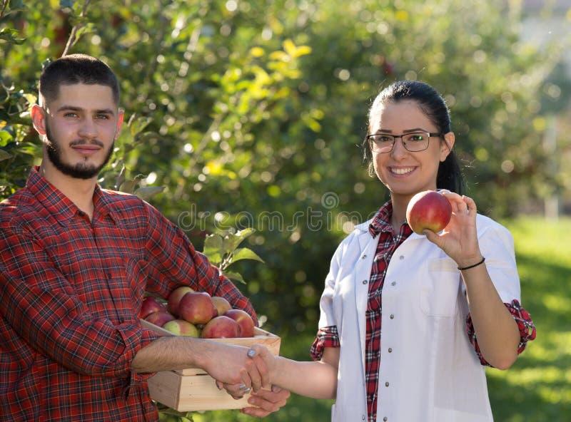 Fazendeiro e agrônomo que agitam as mãos no pomar de maçã fotos de stock royalty free