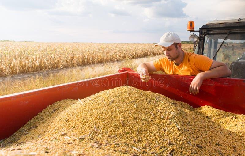 Fazendeiro e feijões de soja imagens de stock