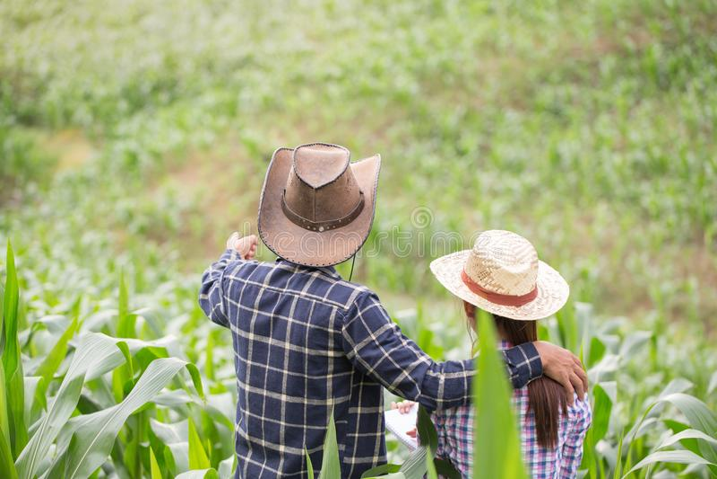 Fazendeiro e pesquisador que analisam a planta de milho foto de stock royalty free