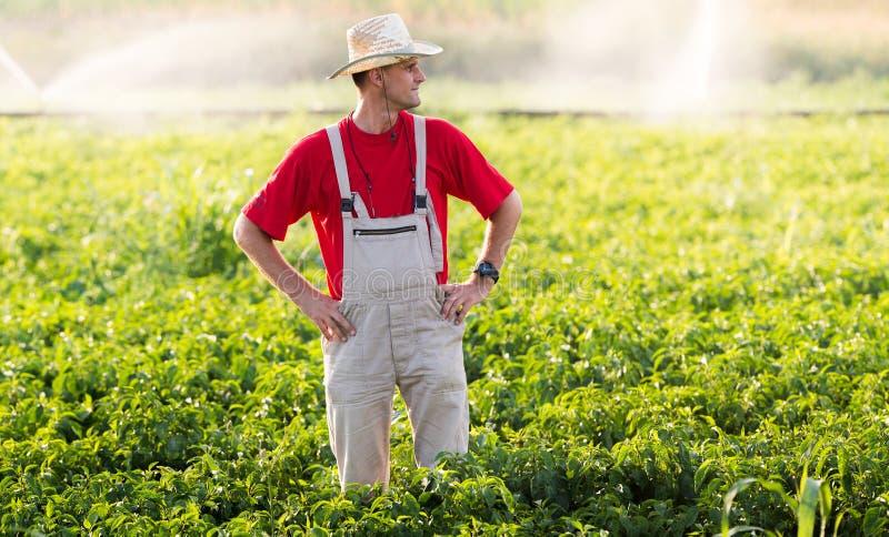 Fazendeiro em campos da pimenta imagem de stock