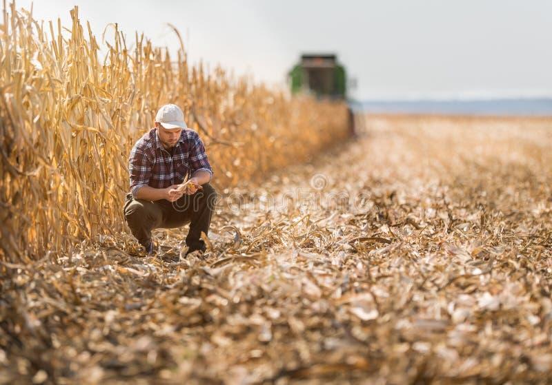 Fazendeiro em campos de milho foto de stock