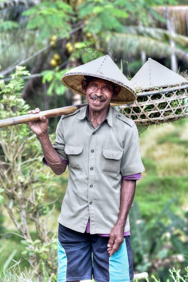 Fazendeiro em campos do arroz de Jatiluwih, Bali, Indonésia imagem de stock