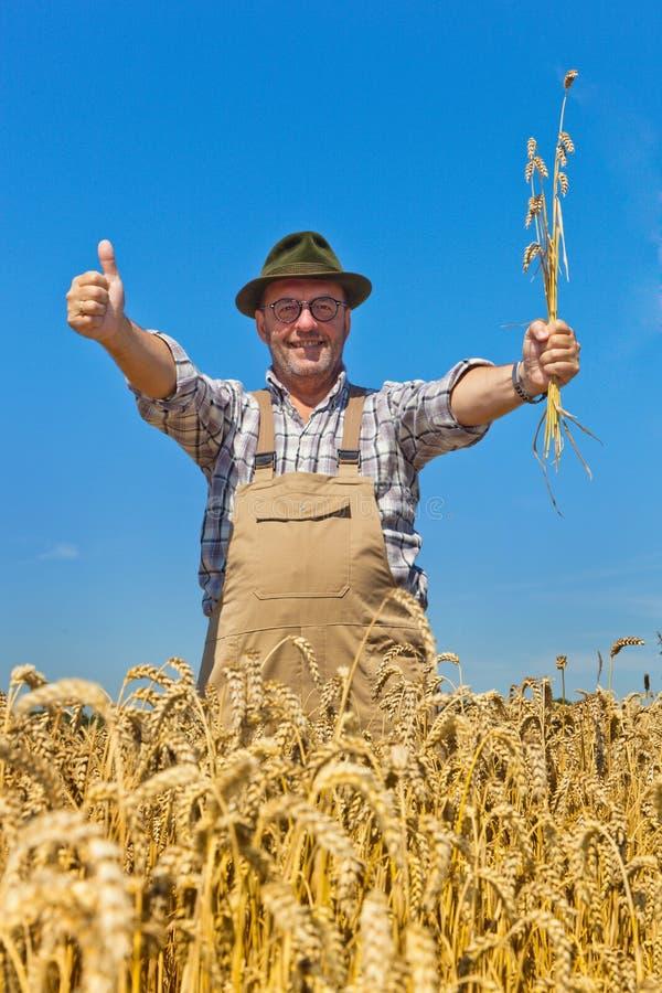 Fazendeiro em um campo de trigo imagem de stock