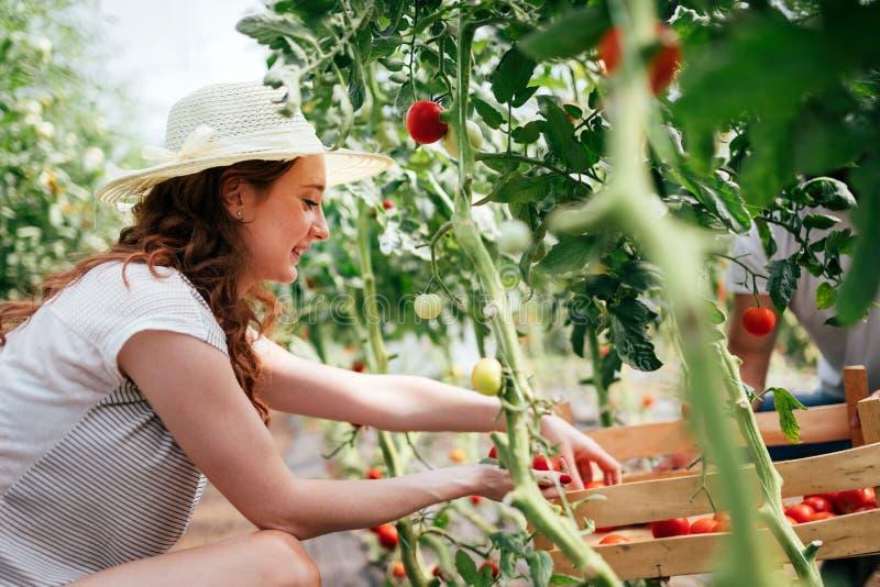 Fazendeiro fêmea feliz atrativo que trabalha na estufa foto de stock royalty free