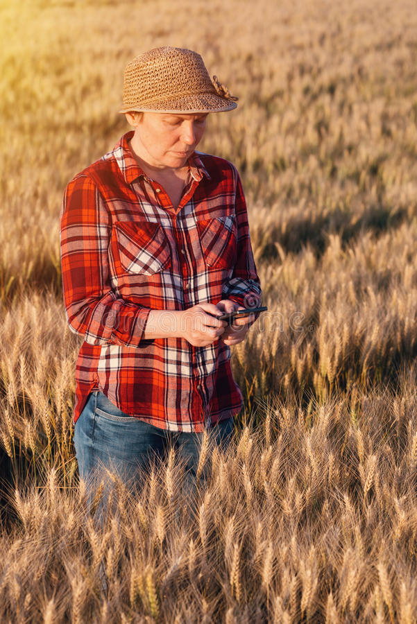 Fazendeiro fêmea que está no campo de trigo e que usa o telefone celular foto de stock royalty free