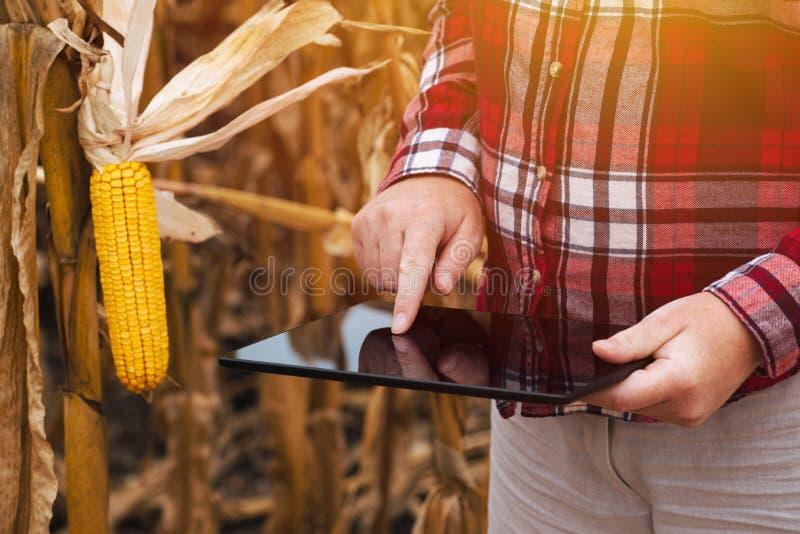 Fazendeiro fêmea que trabalha no tablet pc no campo de milho fotos de stock royalty free