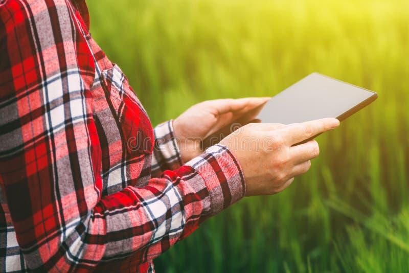 Fazendeiro fêmea que usa o tablet pc no campo da colheita do trigo fotos de stock