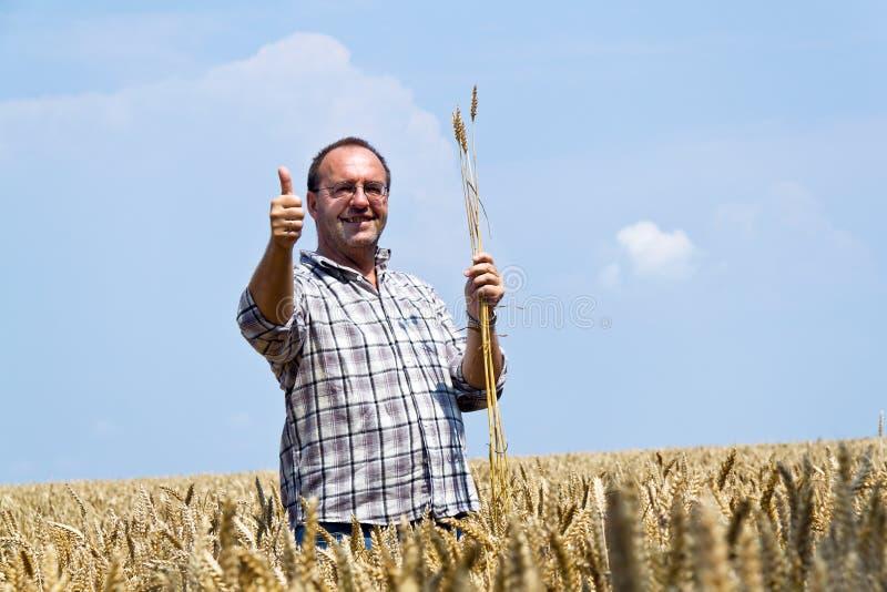 Fazendeiro - fazendeiro na caixa de cereal. imagens de stock royalty free