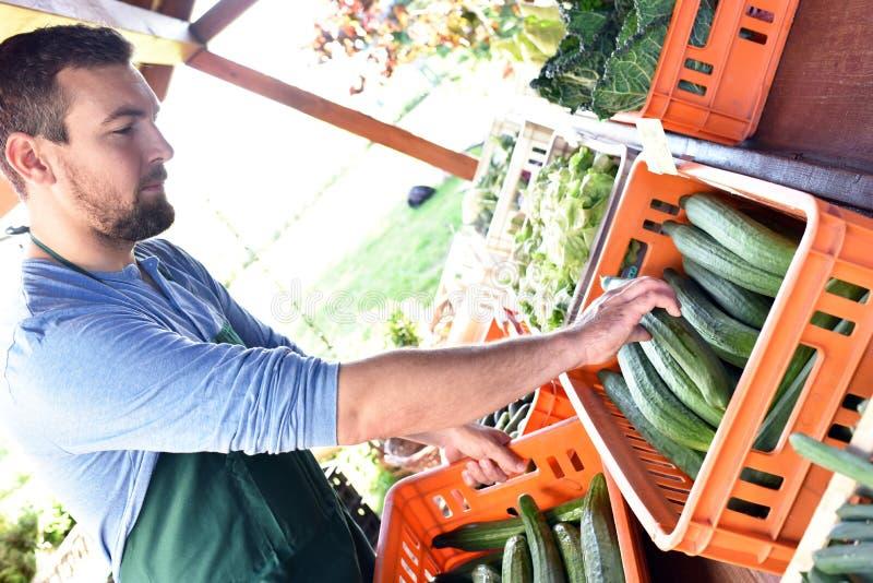 Fazendeiro feliz que cresce e que colhe vegetais na exploração agrícola fotografia de stock
