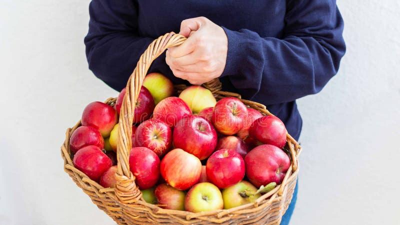 Fazendeiro guarda cesta com maçãs fotografia de stock royalty free