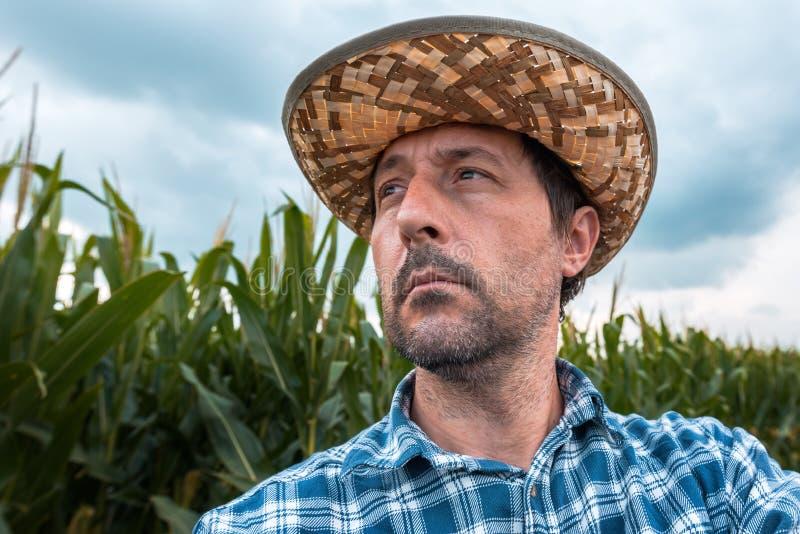 Fazendeiro interessado do milho no campo fotografia de stock royalty free