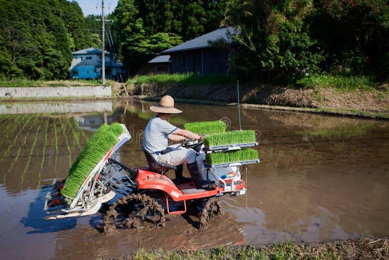 Fazendeiro japonês que planta um campo do arroz pelo trator imagem de stock