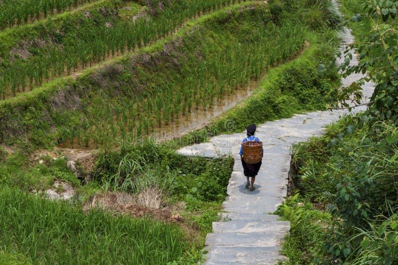 Fazendeiro local que leva uma cesta nela para trás ao longo de um campo terraced do arroz perto da vila de Dazhai em China imagens de stock