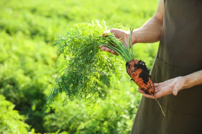Fazendeiro masculino com a cenoura no campo foto de stock