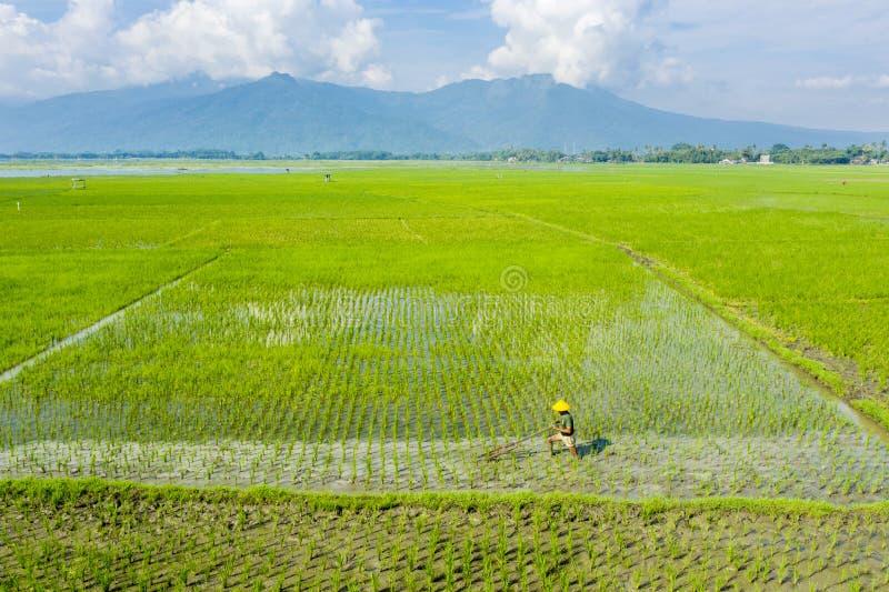 Fazendeiro masculino que ara o campo do arroz em Bali imagem de stock royalty free