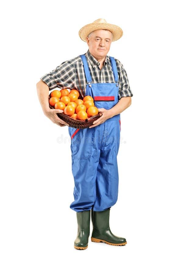 Fazendeiro masculino que mantem uma cesta cheia de tomates imagem de stock royalty free