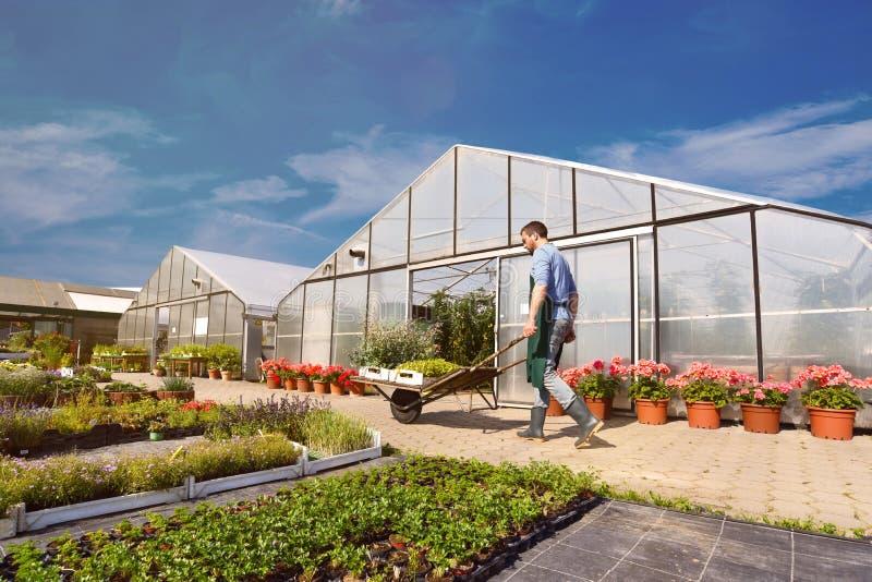 Fazendeiro na agricultura que cultiva os vegetais - estufas no th fotos de stock