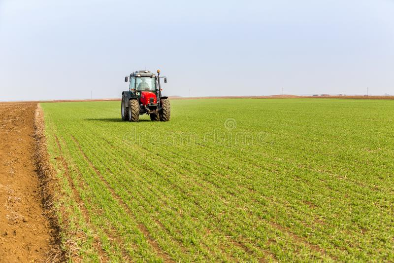 Fazendeiro no campo de trigo da fertilização do trator na mola com npk imagem de stock royalty free