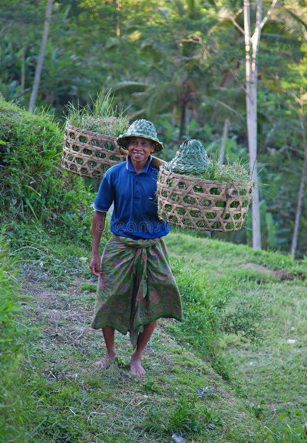 Fazendeiro no campo do arroz imagens de stock