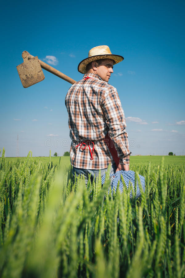 Fazendeiro no campo verde fotos de stock royalty free
