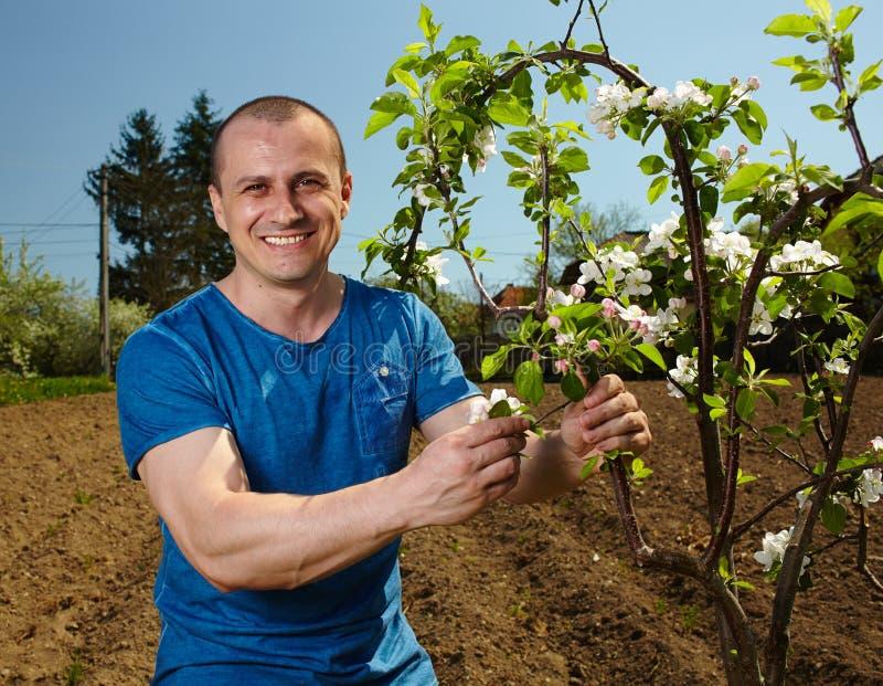 Fazendeiro novo com uma árvore de maçã fotos de stock