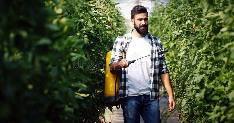 Fazendeiro novo que protege suas plantas com produtos químicos imagens de stock royalty free
