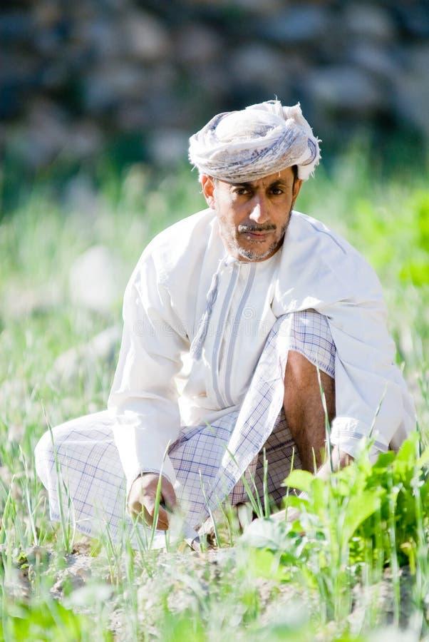 Fazendeiro omanense do arroz foto de stock